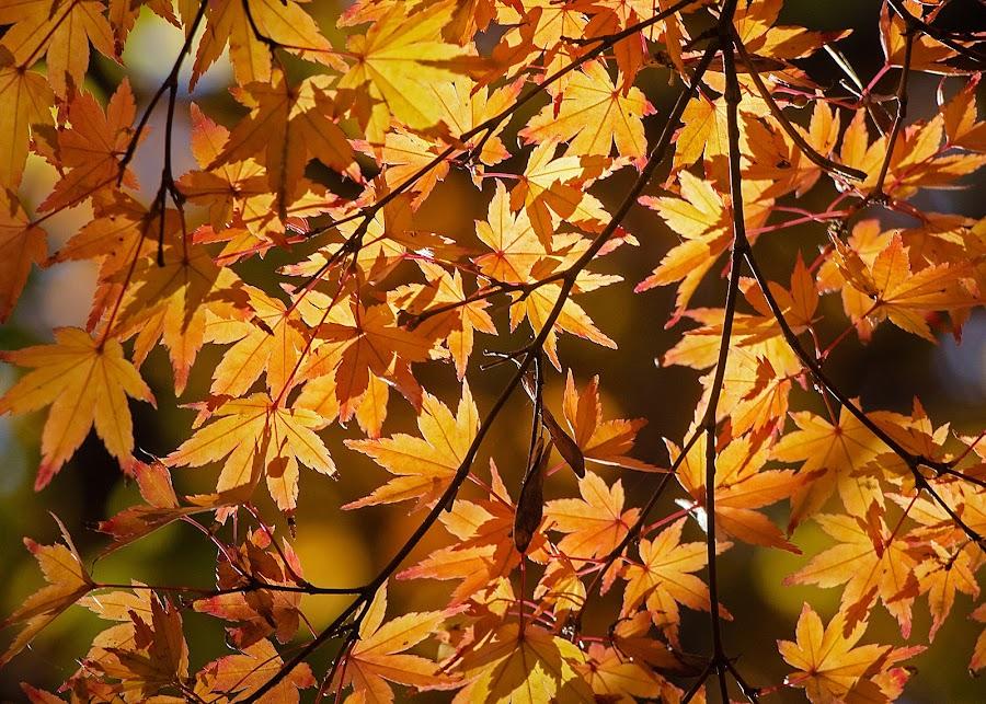 by Estislav Ploshtakov - Nature Up Close Leaves & Grasses