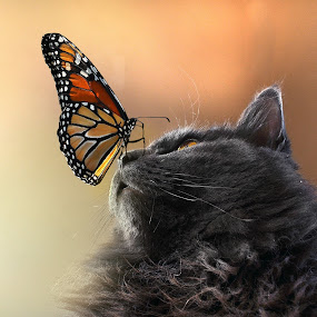 Butterfly  Kisses by Corinne Noon - Animals - Cats Portraits ( cats, butterfly, whiskers, portraits, gray,  )