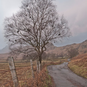 Lake District Tree by Christian Rawlinson - Landscapes Mountains & Hills ( uk, england, tree, christian rawlinson, lake district )