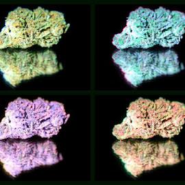 Locomotion by Ashleigh Powell - Abstract Macro ( cannabis, medical marijuana, pop art, colorful, beautiful nature )
