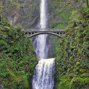 Multnomah Falls by Diana Treglown - Landscapes Travel