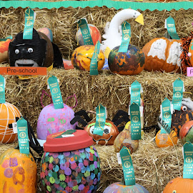 Pumpkin Faces by Roxanne Dean - Public Holidays Halloween ( hay bales, ribbons, pumpkins, contest, halloween,  )