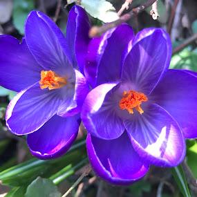 Flowers in the city park by Alesanko Rodriguez - Flowers Flowers in the Wild ( spring, flowers, beauty, blue, city, nature, plant, florals, season, park, colorful, summer )