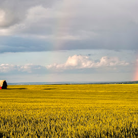 On The Farm by Corey Yeatman - Landscapes Prairies, Meadows & Fields ( field, farm, dawson creek, barn, bc, rainbow )