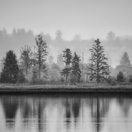 Sentinels in the fog  by Todd Reynolds - Black & White Landscapes
