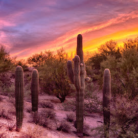 Arc Light by Charlie Alolkoy - Landscapes Deserts ( desert, sunset, arizona, tucson, sunrise, cactus )