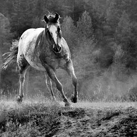 Raising Dust - 3779 by Twin Wranglers Baker - Black & White Animals (  )