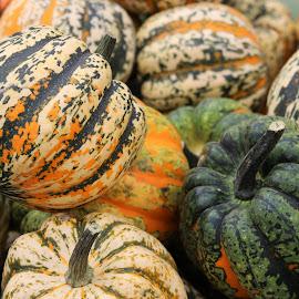 colourful pumpkins by Carola Mellentin - Food & Drink Fruits & Vegetables (  )