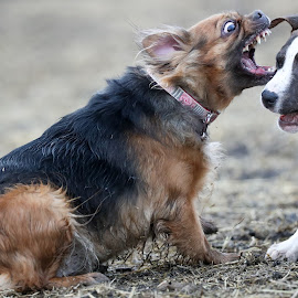 Muncher by Peter Marzano - Animals - Dogs Playing