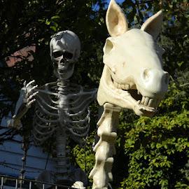 by Liz Hahn - Public Holidays Halloween