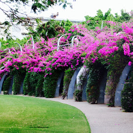 Purple elegance in the city  by Colette Edwards - City,  Street & Park  City Parks (  )