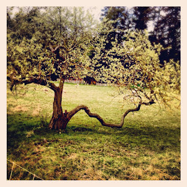 tree on sheep farm by Grace Grantham - Nature Up Close Trees & Bushes (  )