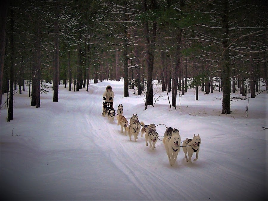 by Michael Collier - Animals - Dogs Running (  )