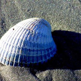 shell in shadow by Marty Stepalavich - Nature Up Close Sand