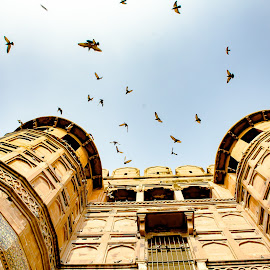Look Up by Melody Dashora - Buildings & Architecture Other Exteriors ( sky, india, looking up, birds, outside )