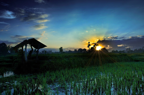 Bali Sunrise  by Benjamin Arthur - Landscapes Prairies, Meadows & Fields ( bali, paddy field, rice, ubud, indonesia, asia, benjaminarthur.com, southeast asia )