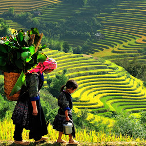 Rice teraces - Viet Nam by TAN NGUYEN MINH - Landscapes Travel