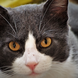 by Darrell Tenpenny - Animals - Cats Portraits