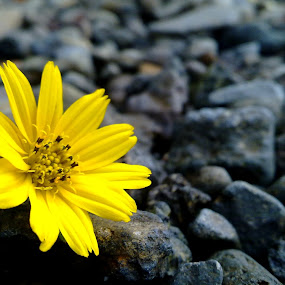 Stones and Flower by Iwan Siswanto Setiaonebudhi Nugraha - Instagram & Mobile Other ( camera phone, stone, n97 mini, flower, mobile photography )