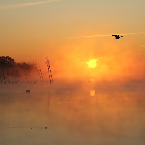 Misty Morn by Roger Becker - Landscapes Waterscapes ( water, sunset, sunrise, landscape, birds )