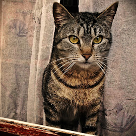 I see you by Ciprian Apetrei - Animals - Cats Portraits ( paris, cat, window, portrait, animal )