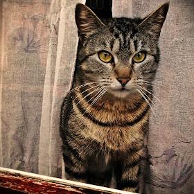 Pisic la geam.JPG