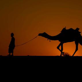 Desert King by Monish Kumar - Landscapes Deserts