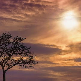 Ticket to Heaven by Jiri Cetkovsky - Nature Up Close Trees & Bushes ( tree, heaven, sunset, solitaire, alone, sun )