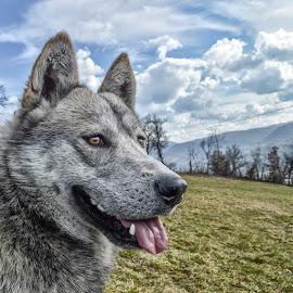 dog by Miloš Karaklić - Animals - Dogs Portraits