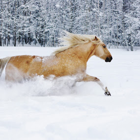 by Minna Mäkinen - Animals Horses