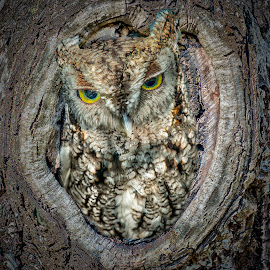Owl in tree! by William Underwood  - Digital Art Animals
