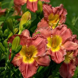 WKBG 3 by Larry Bidwell - Flowers Flower Gardens