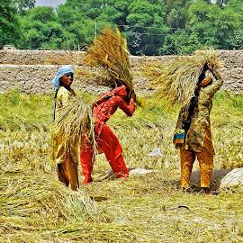 working women by Mohsin Raza - People Street & Candids