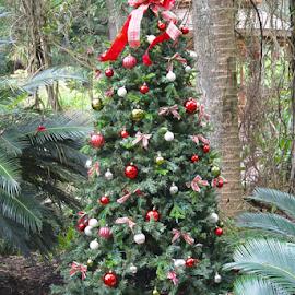 Christmas in the State Park by Priscilla Renda McDaniel - Public Holidays Christmas ( tree, decoration, florida, state park, christmas, holidays, Christmas, card, Santa, Santa Claus, holiday, season, Advent,  )