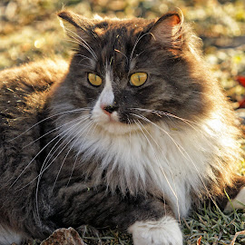 Loving the Sunshine by Twin Wranglers Baker - Animals - Cats Portraits (  )