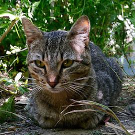 Gatos abandonados by Zulmira Relvas - Animals - Cats Portraits ( gato,  )