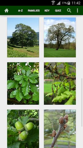 Trees of Britain - screenshot
