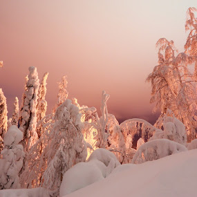 by Simon Lambert - Nature Up Close Trees & Bushes ( red, cold, ice, magical, snow, trees, finland, pink, frozen, freezing, colours )