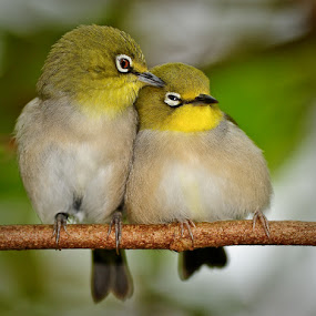 Love birds by Joe McBroom - Animals Birds