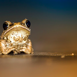 The eyes by Anitava Roy - Animals Amphibians ( macro art, macro, animal_portrait, frog, macro photography, close up, macro shot, eyes )
