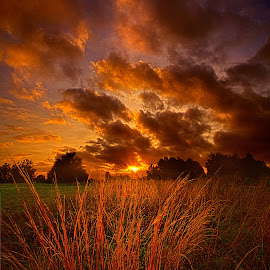 Dawn's First Light by Phil Koch - Landscapes Prairies, Meadows & Fields ( vertical, farmland, yellow, leaves, love, sky, tree, nature, autumn, perspective, light, orange, twilight, art, agriculture, horizon, portrait, dawn, environment, serene, trees, lines, inspirational, wisconsin, natural light, ray, phil koch, landscape, spring, sun, photography, farm, horizons, inspired, clouds, office, park, green, scenic, morning, shadows, field, red, blue, sunset, amber, peace, meadow, summer, beam, sunrise, earth )