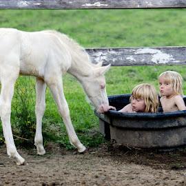 Horseplay by Jen St. Louis - Babies & Children Children Candids ( horse, foal, farm life, kids candid, farm, kids,  )