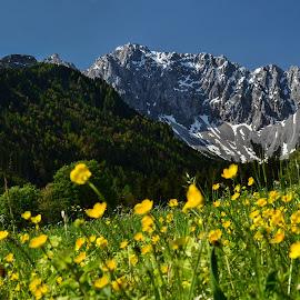 Pomlad v hribih by Bojan Kolman - Landscapes Mountains & Hills