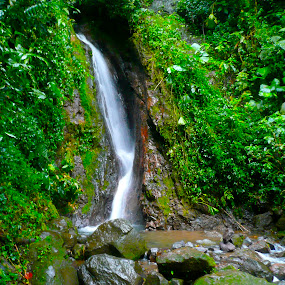 Rainforest Water by Max Marolt - Landscapes Waterscapes ( water, costa rica, rainforest )