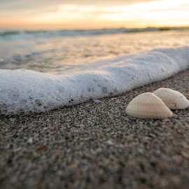 Shelly Sunset by Clay Harvey - Nature Up Close Sand ( sunset, seashell, ocean, beach, sunrise )