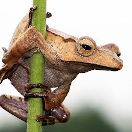 Hello by Saefull Regina - Animals Amphibians