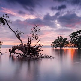 The Fallen by Raffy Nadayag - Landscapes Sunsets & Sunrises ( roots, clouds and sea, trees, sunrise, seascape, mangrove,  )