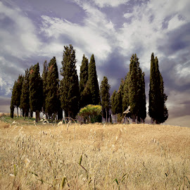 Il Boschetto dei Cipressi by Mark Soetebier - Nature Up Close Trees & Bushes ( canon, tuscany, tree, val d'orcia, trees, unesco )