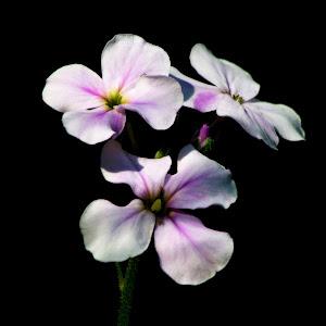 Flower-41.jpg