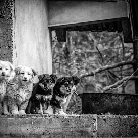 Curious by Nenad Borojevic Foto - Animals - Dogs Puppies ( dogs, dog, puppies,  )